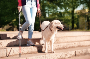 Guide dog helping person with white cane walking down stairs.